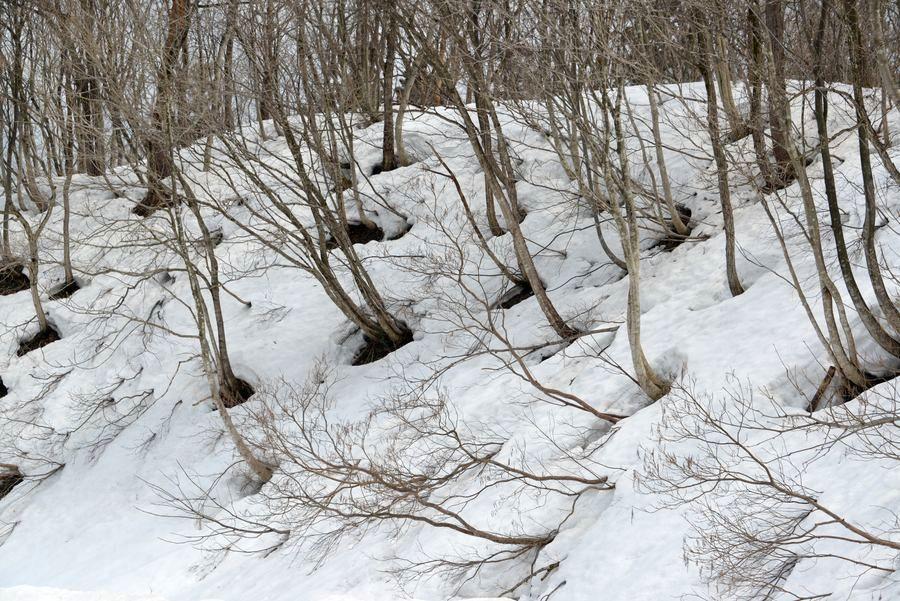 斜面の雑木林-1