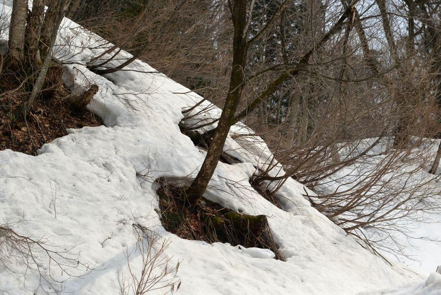 斜面の雑木林-2