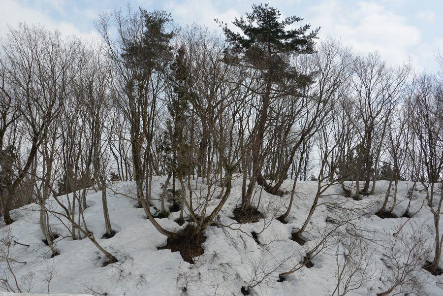 斜面の雑木林-3