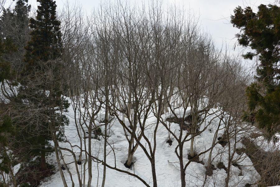斜面の雑木林-4