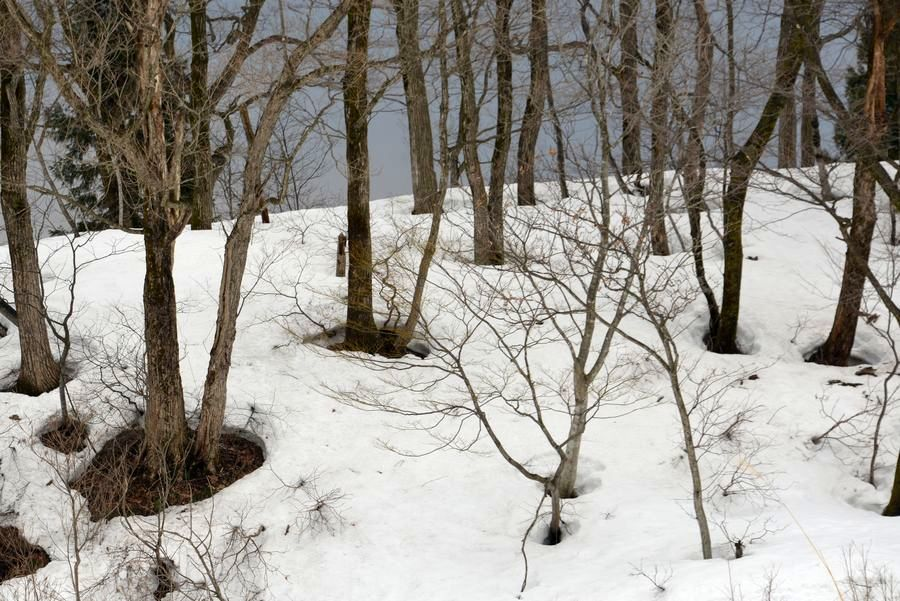 斜面の雑木林-5