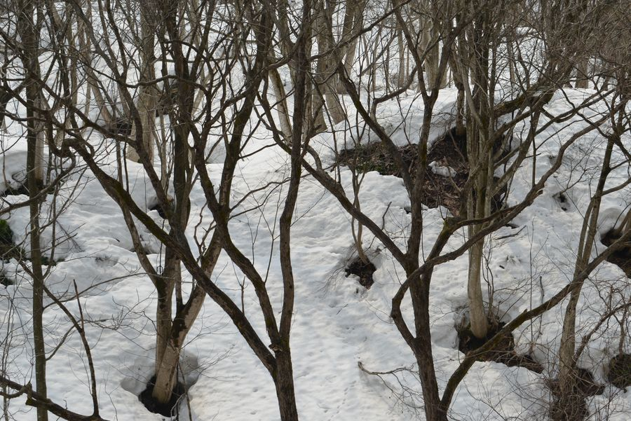 斜面の雑木林-6