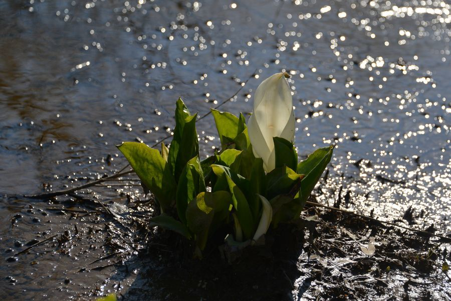 春を告げる花たち-5
