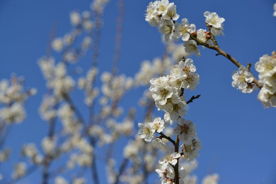 春の植物たち-1