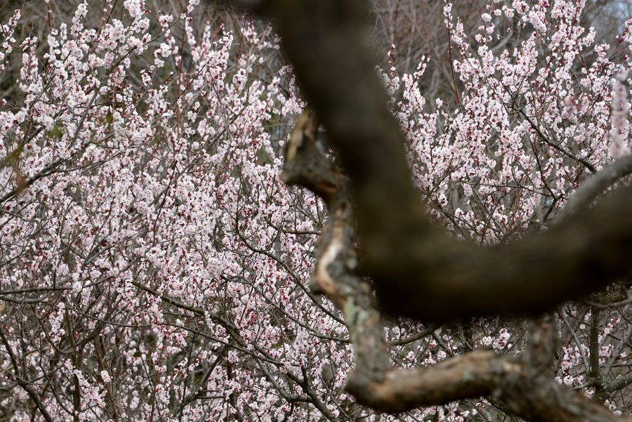 春の植物たち-3