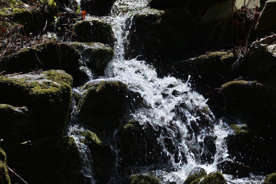 公園の水に-1