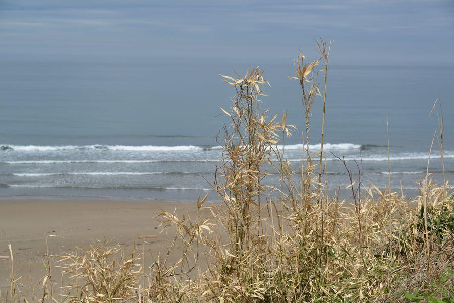原発の見える海岸-4