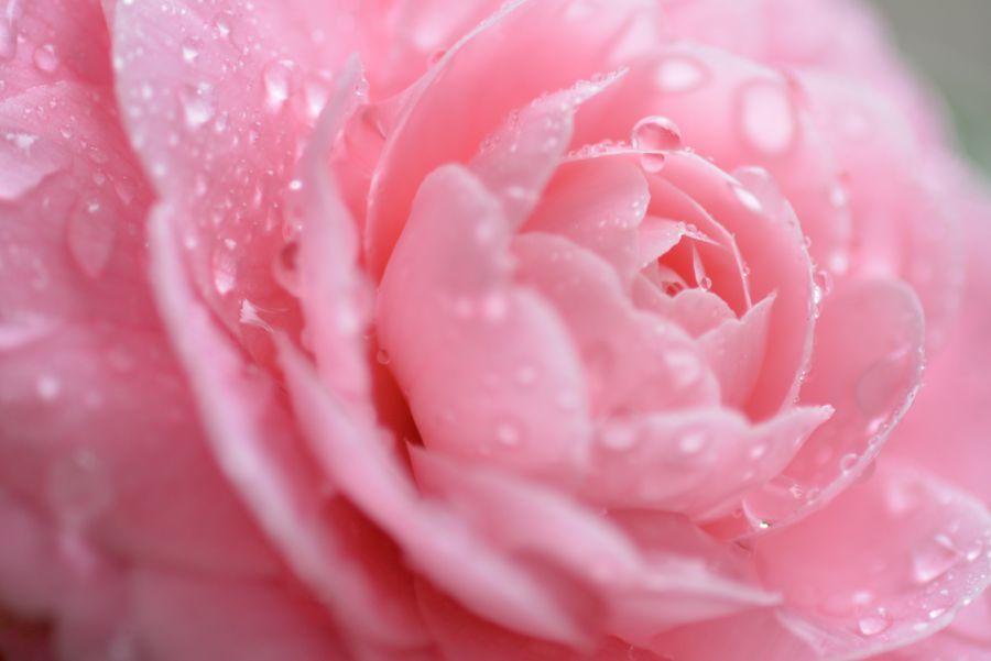 雨の中に花-5