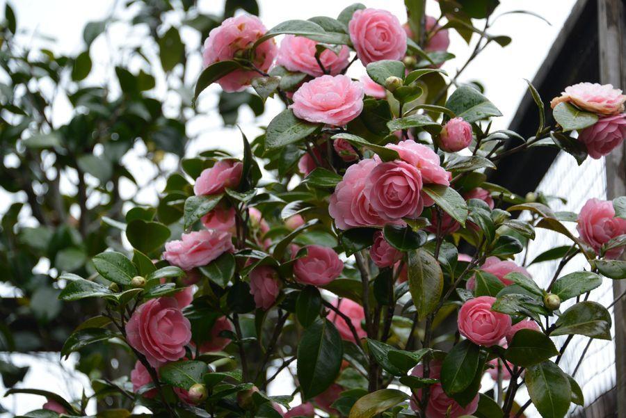 雨の中の花-6