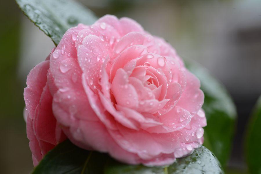 雨の中に花-1