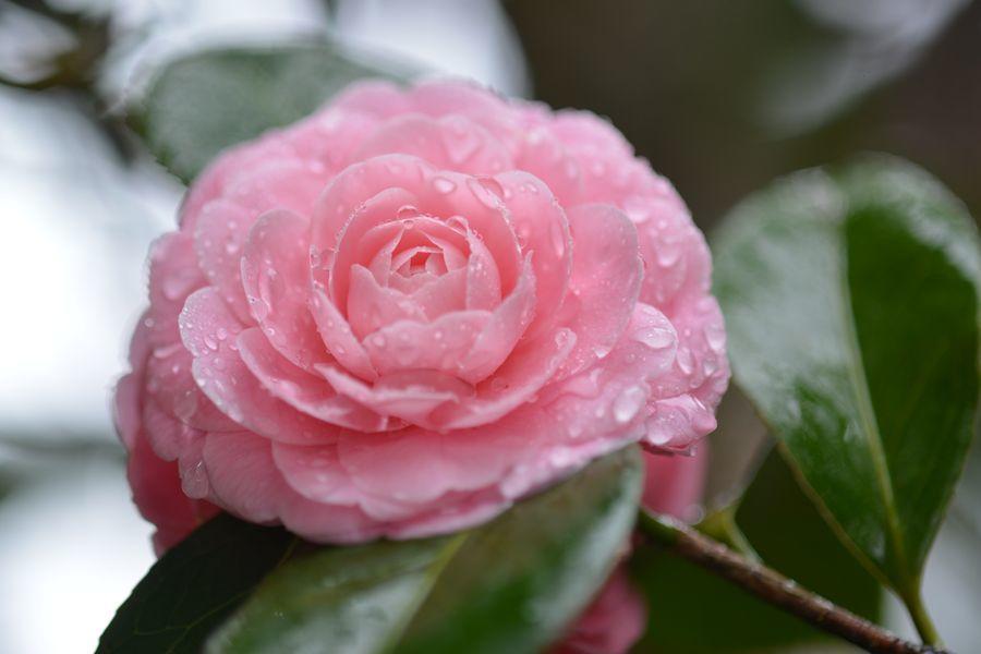 雨の中に花-2
