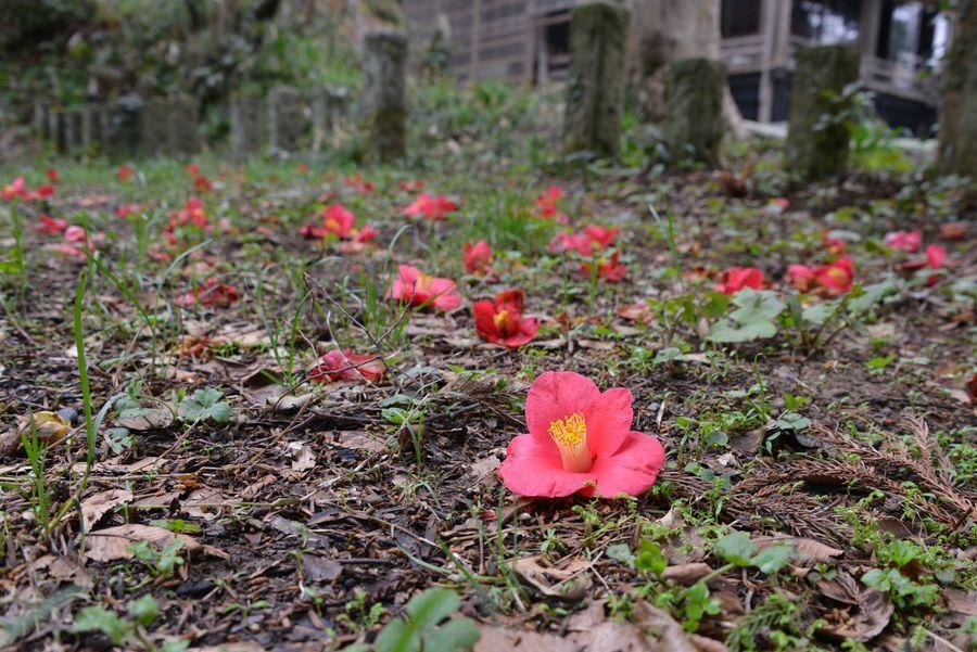 春の花たち-3