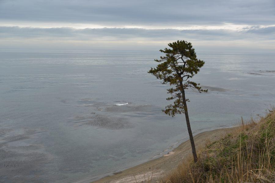 海を望む-1