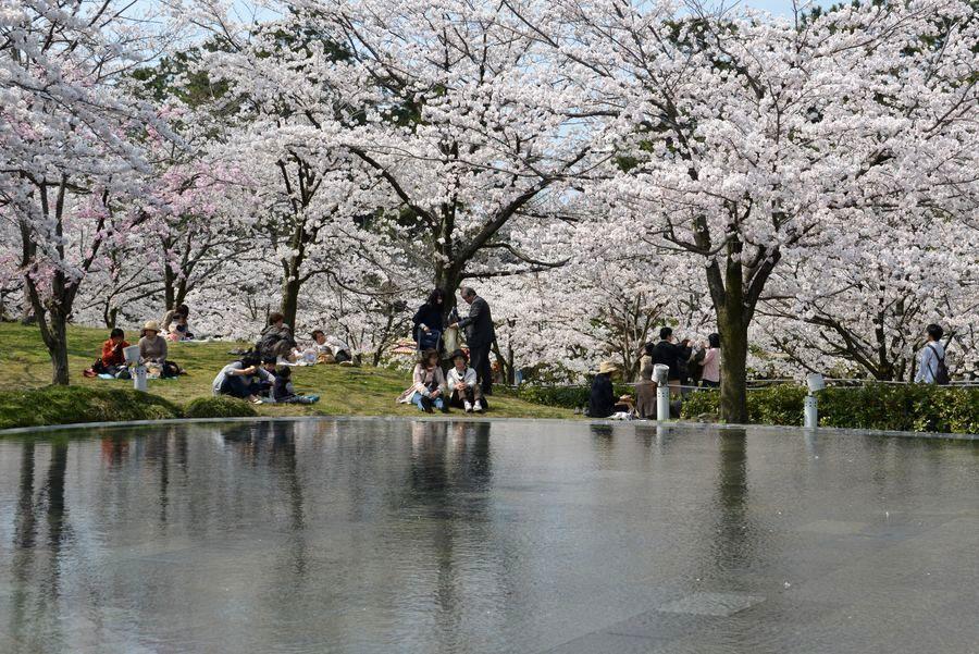 花見 白山公園-1