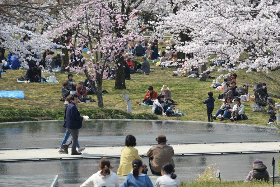 花見 白山公園-2