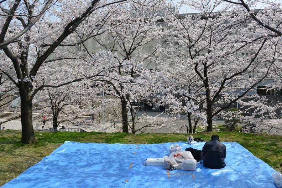 花見 白山公園-4