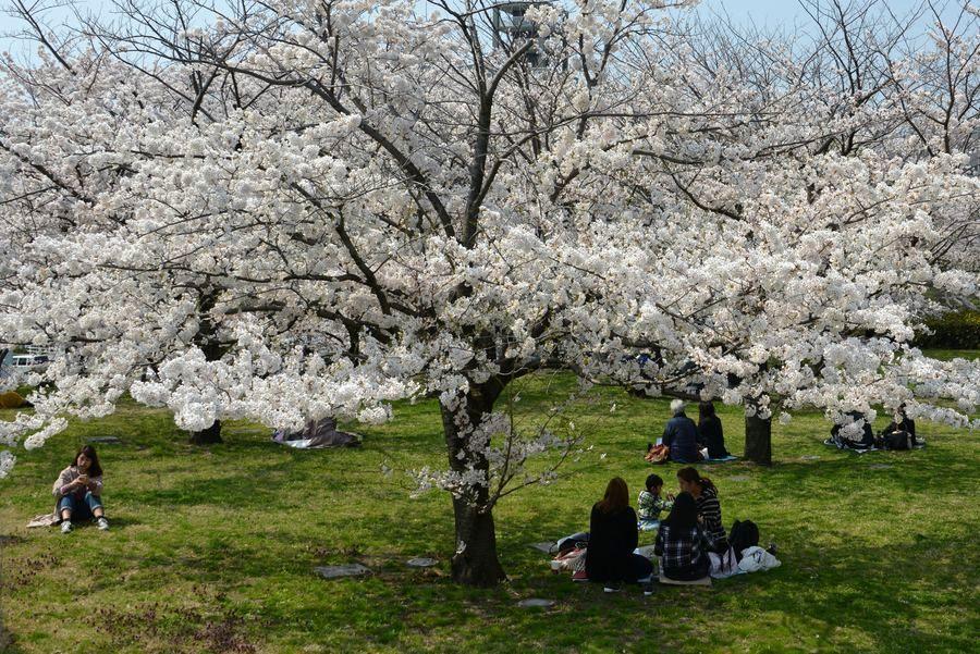花見 白山公園-5