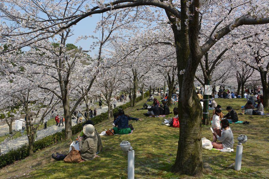 花見 白山公園-6
