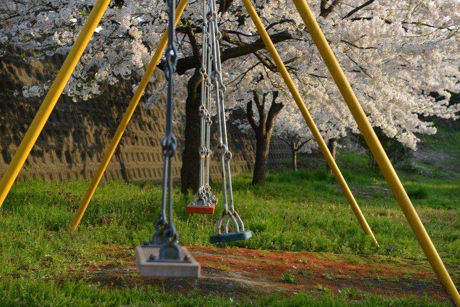 遊具のある公園と桜-2