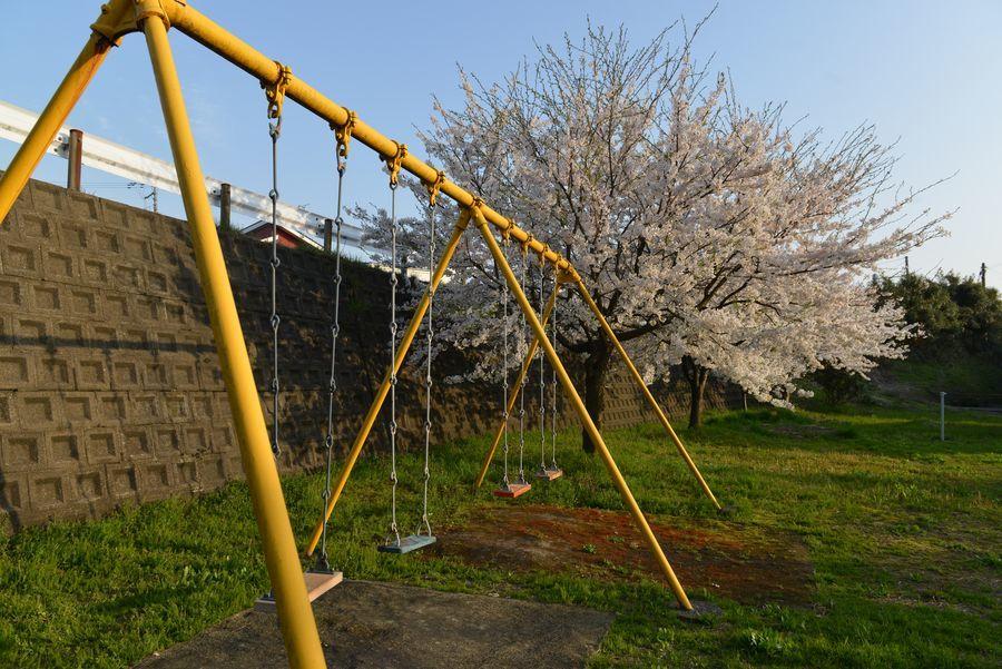 遊具のある公園の桜-6