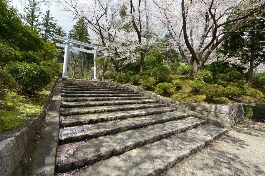 鳥居と桜-3