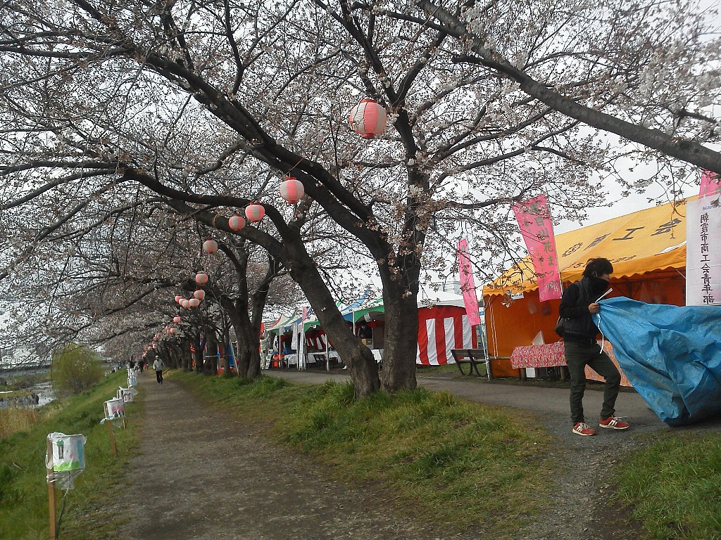 F1000120黒目川花祭り4月2日午前9時半