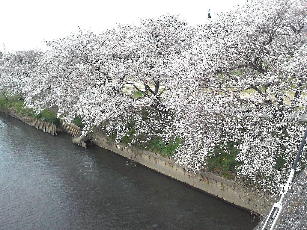 F1000165新河岸川4月5日