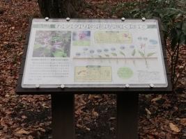 自然体験林解説板リニューアル後