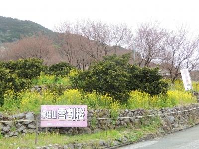DSCN7975.jpg