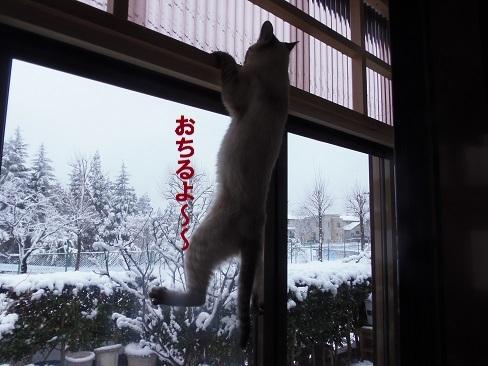 また雪です!5