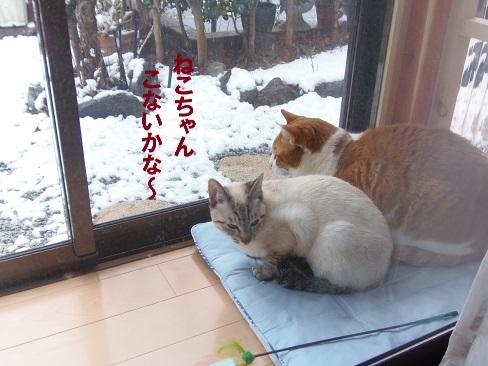 また雪です!2