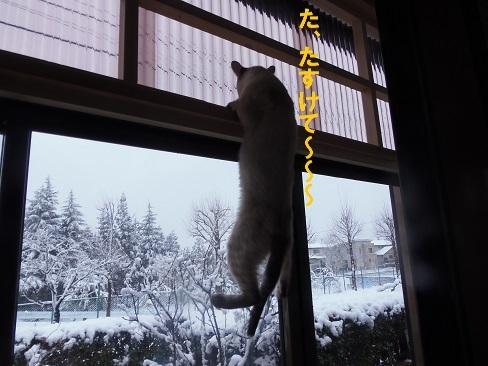 また雪です!4