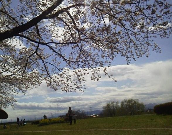 170407花見桜の下に座って