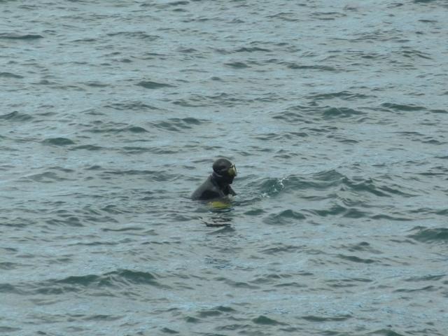 アワビ潜水漁の様子1