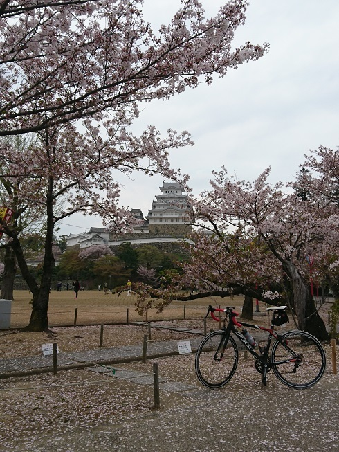 姫路城お花見