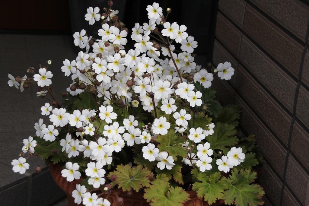 花が目立った_4
