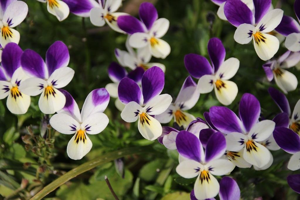 花が目立った_5