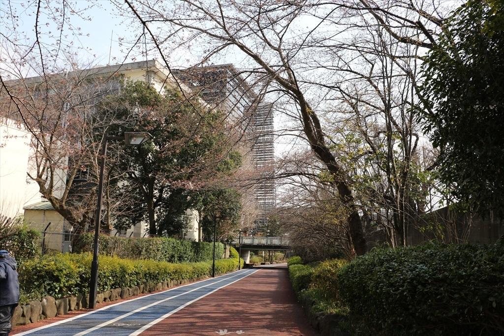 呑川遊歩道から見たキャンパス_1