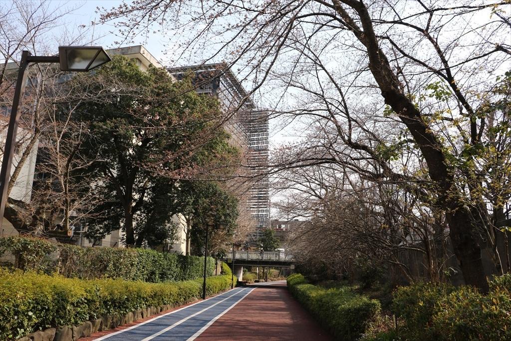 呑川遊歩道から見たキャンパス_2