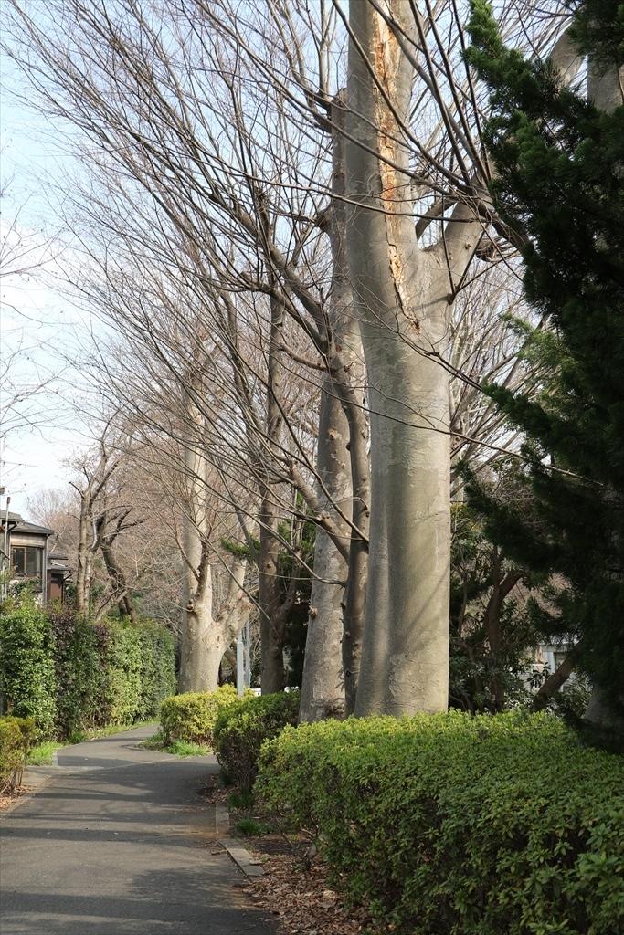 大岡山北地区の端っこの方を歩く_1