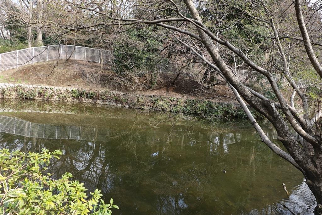 坂の途中から見えていた小さな池があった_2