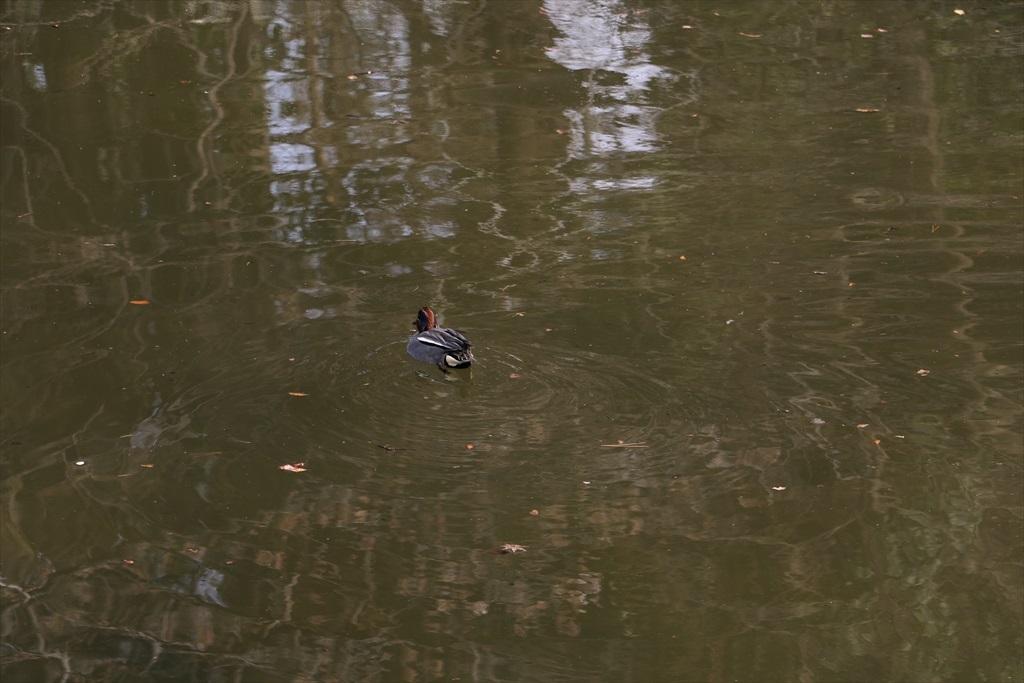 坂の途中から見えていた小さな池があった_3