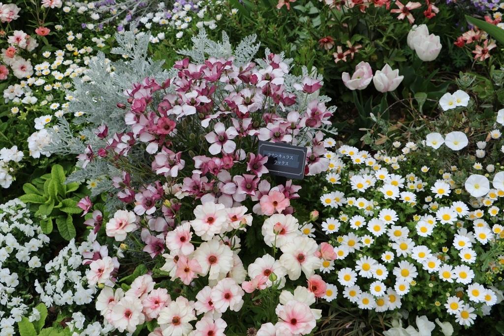 山下公園_花壇の花_28
