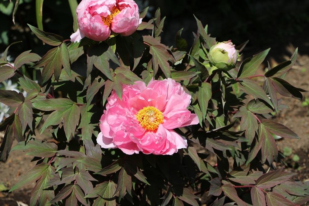 境内の花_9