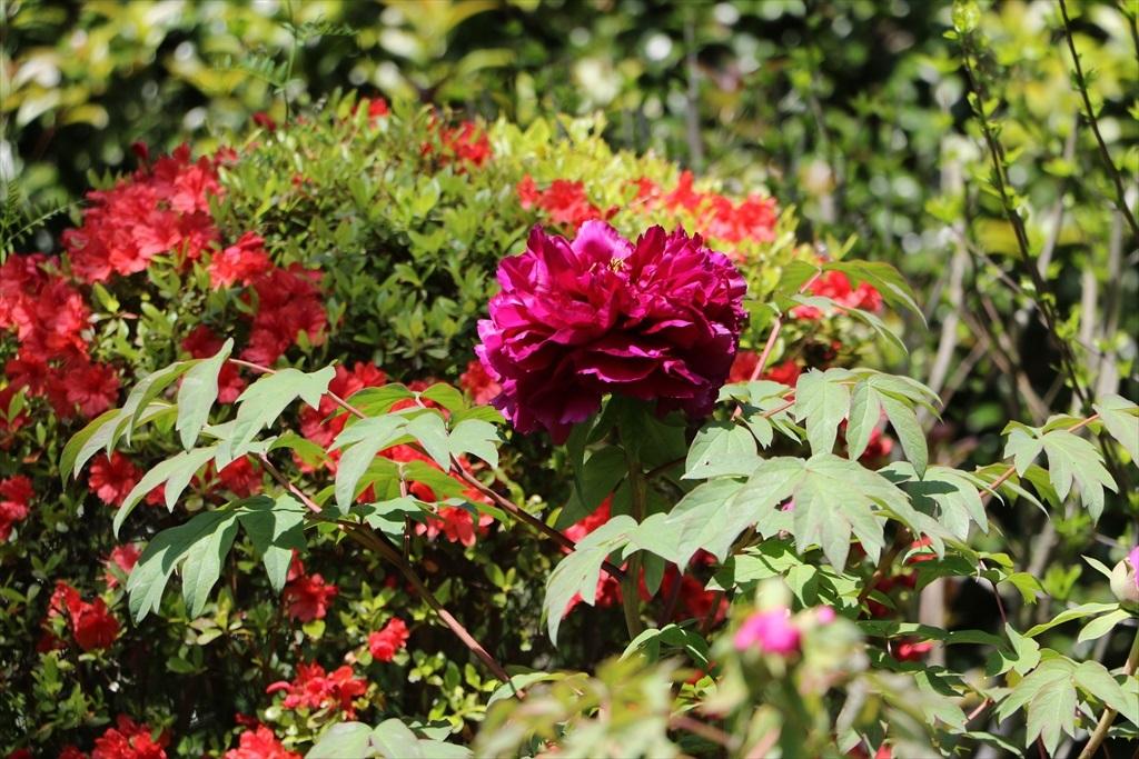 墓苑付近の花さん_6