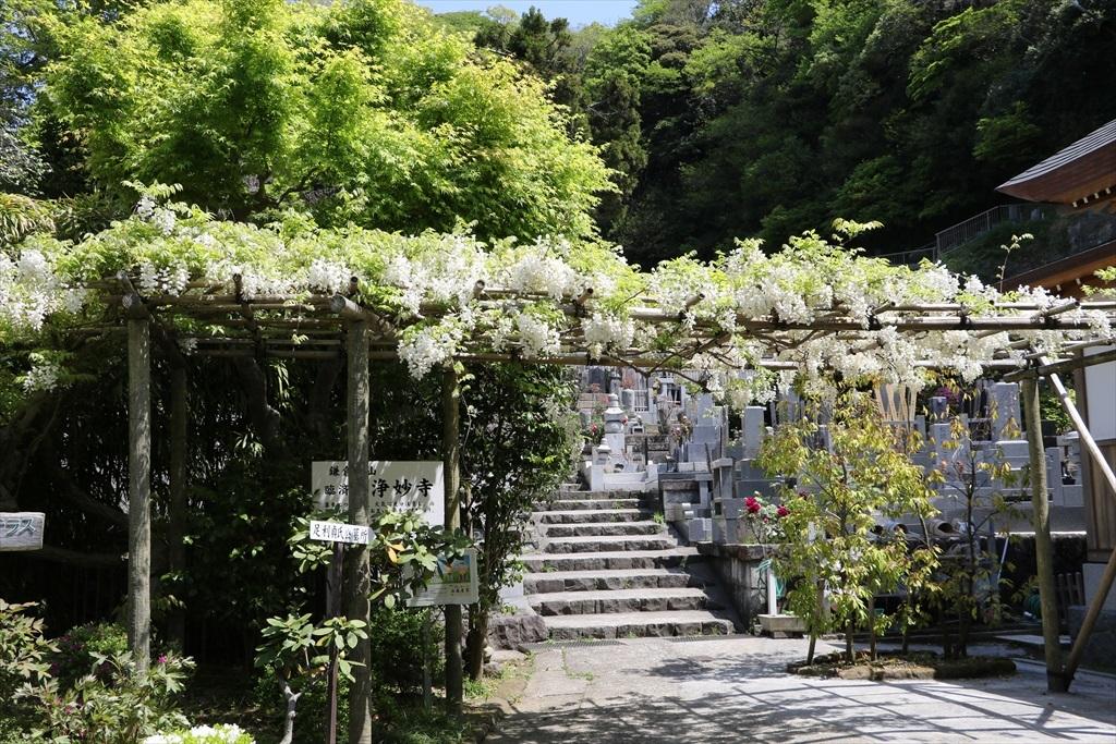 墓苑付近の花さん_7