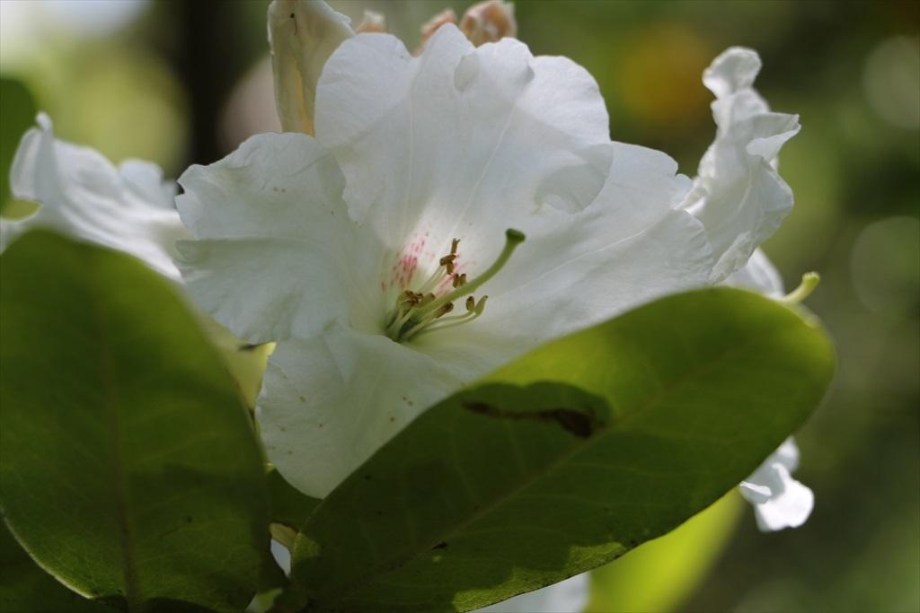 墓苑付近の花さん_13