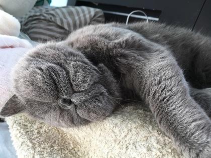 人間のように寝る