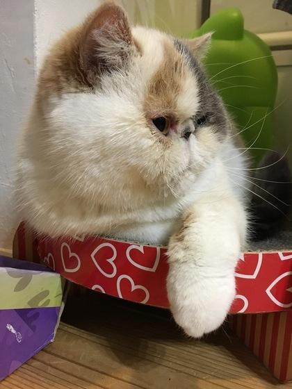 暖かくなってきたので、この爪とぎがお気に入り