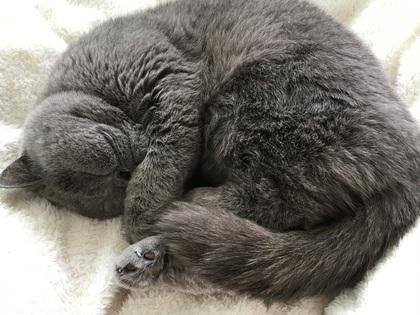 猫は丸くなる